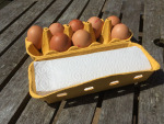 Egg Box with up to ten eggs